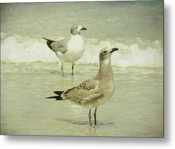 Seabirds View Metal Print by JAMART Photography