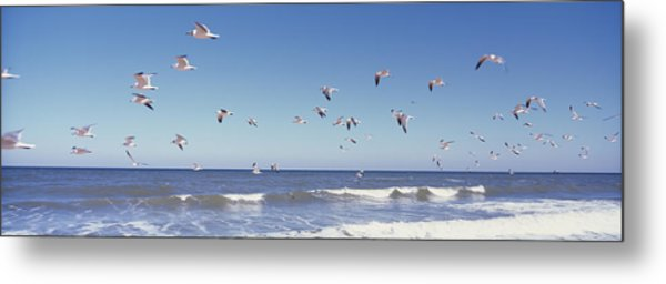 Birds Flying Over The Sea, Flagler Metal Print