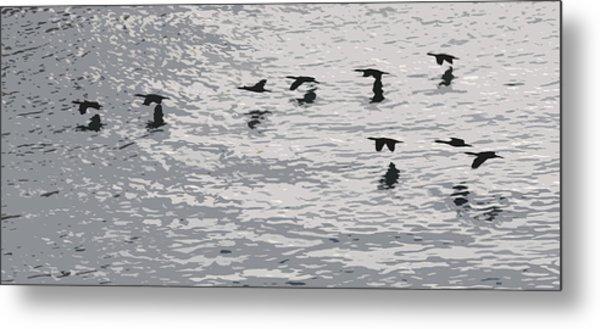Birds In Flight. Metal Print by Robert Rodda