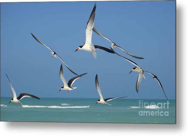 Birds In Paradise Metal Print by Jan Daniels