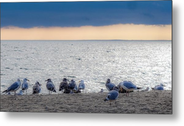 Birds On A Beach Metal Print