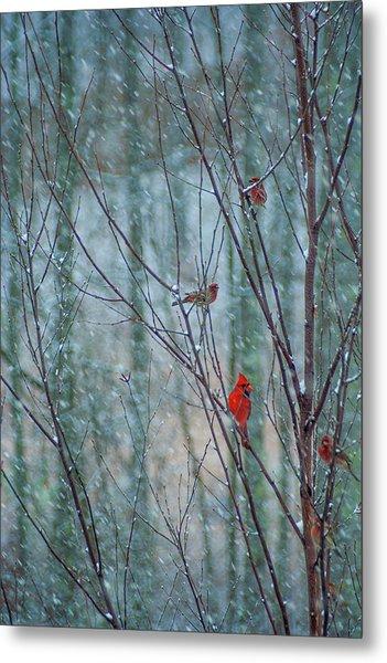 Birds On A Snowy Day Metal Print