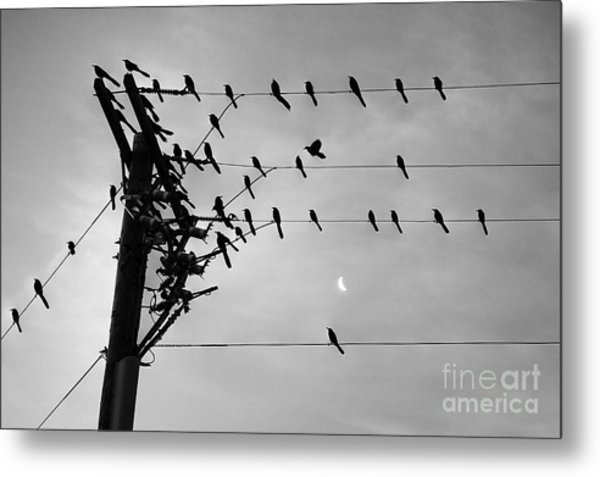 Birds On A Wire Metal Print by Lionel Martinez
