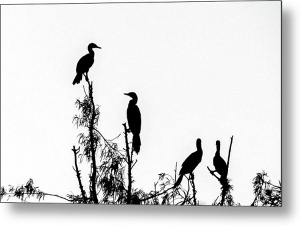 Birds Perched On Branches Metal Print