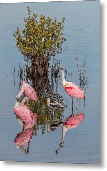 Birds, Reflections, And Mangrove Bush Metal Print
