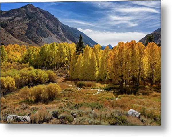 Bishop Creek Aspen Metal Print