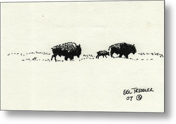 Bison Family Metal Print