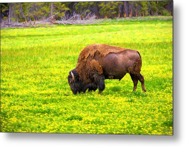 Bison Grazing In The Flowers Metal Print