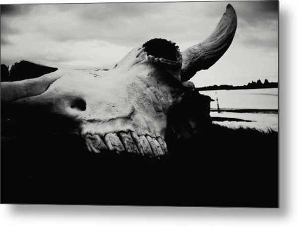 Bison Skull Black White Metal Print