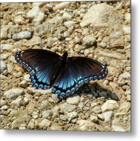 Black And Blue Monarch Butterfly Metal Print