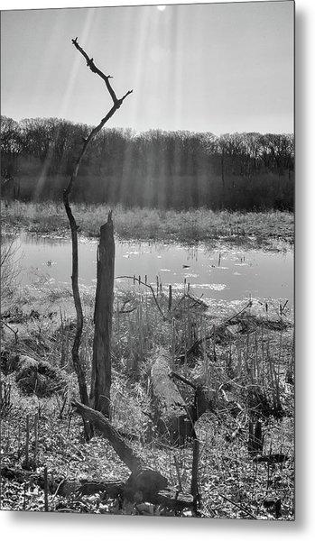 Black And White Bog Metal Print