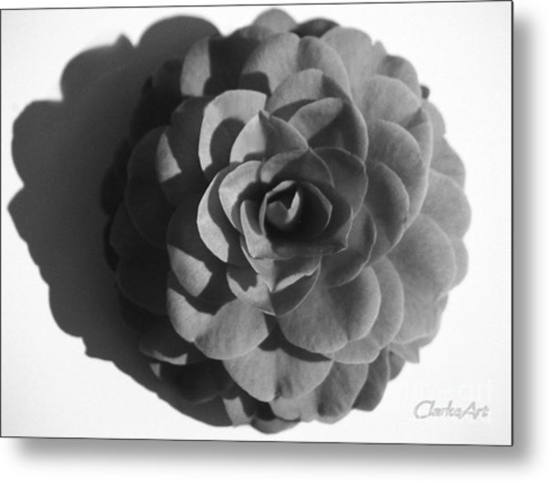 Camellia In Black And White Metal Print