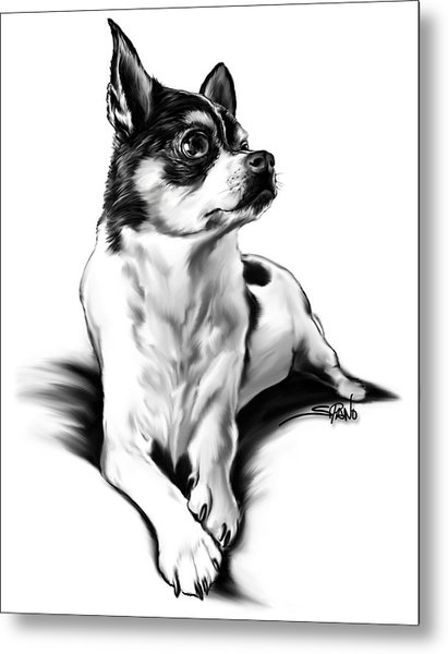 Black And White Chihuahua By Spano Metal Print