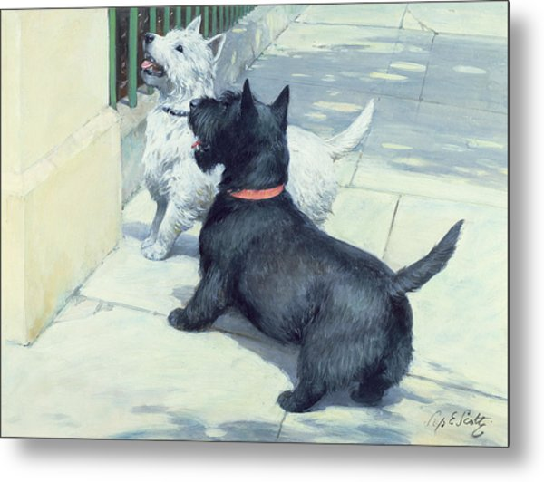 Black And White Dogs Metal Print