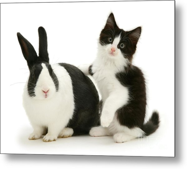 Black And White Double Act Metal Print