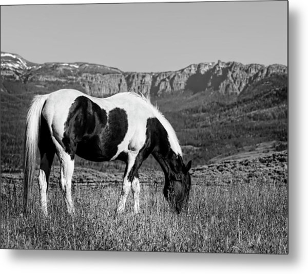 Black And White Horse Grazing In Wyoming In Black And White  Metal Print
