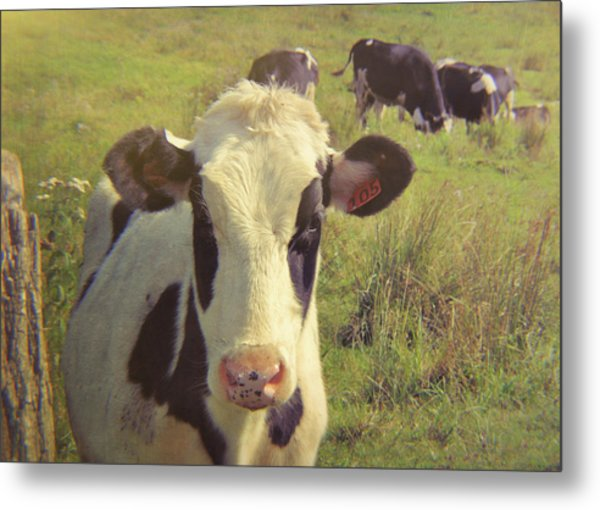 Black And White Pasture Metal Print by JAMART Photography