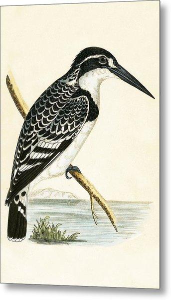 Black And White Kingfisher Metal Print