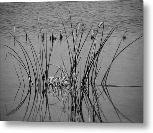 Black And White Marsh Design Metal Print by Rosalie Scanlon