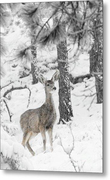 Black And White Mule Deer In Heavy Snowfall Metal Print
