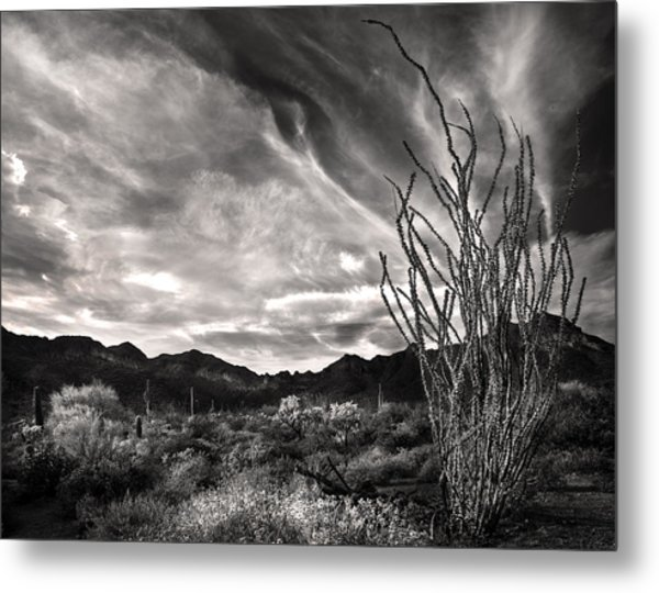 Black And White Ocotillo And Clouds Metal Print