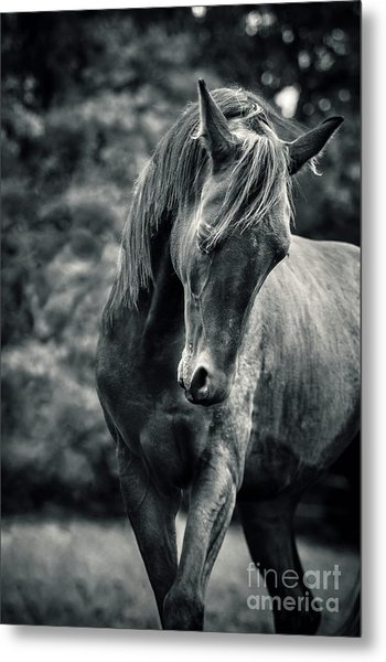 Black And White Portrait Of Horse Metal Print