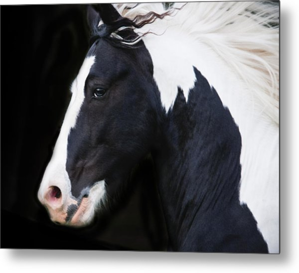 Black And White Study Metal Print