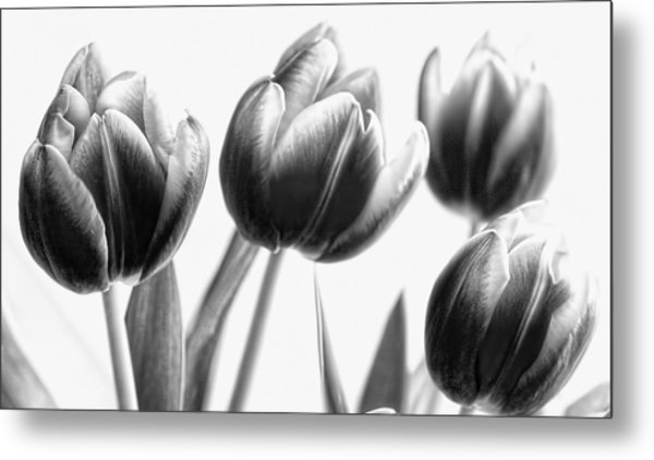 Black And White Tulips Metal Print