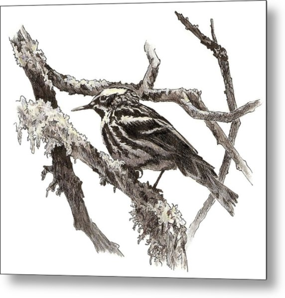 Black-and-white Warbler Metal Print