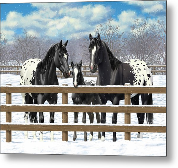 Black Appaloosa Horses In Snow Metal Print by Crista Forest