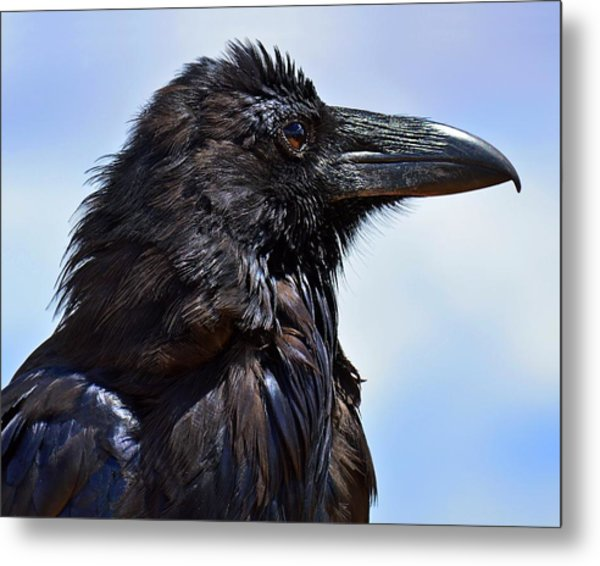 Black As Night - Raven Metal Print