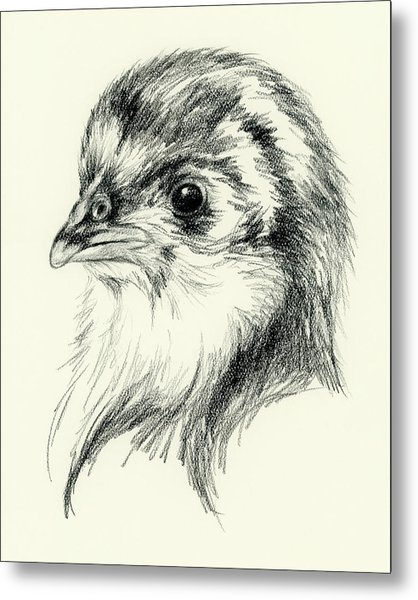 Black Australorp Chick In Charcoal Metal Print