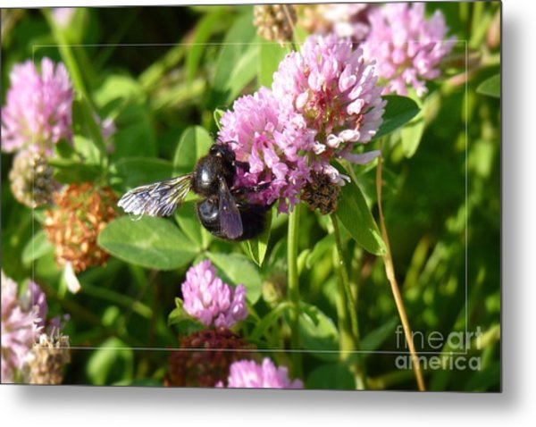 Black Bee On Small Purple Flower Metal Print