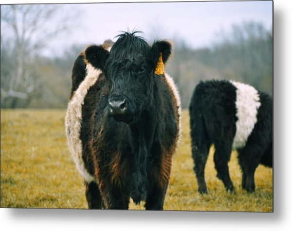 Black Belties Metal Print by JAMART Photography