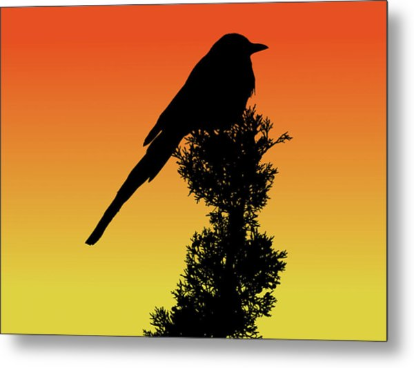 Black-billed Magpie Silhouette At Sunset Metal Print