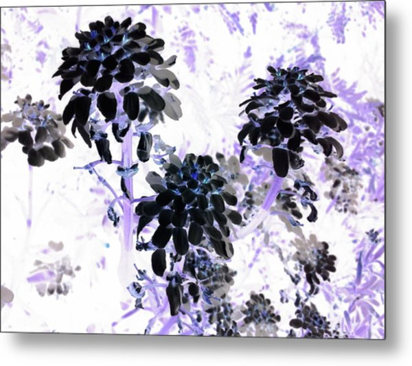 Black Blooms I I Metal Print
