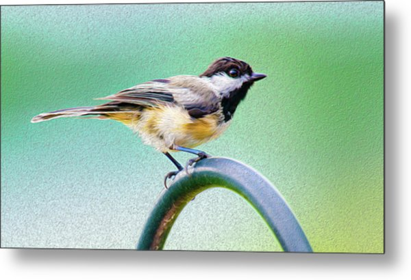 Metal Print featuring the mixed media Black-capped Chickadee Oil by Onyonet  Photo Studios