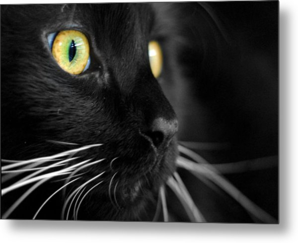 Black Cat 2 Metal Print