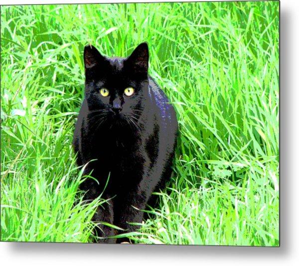 Black Cat In A Green Field Metal Print
