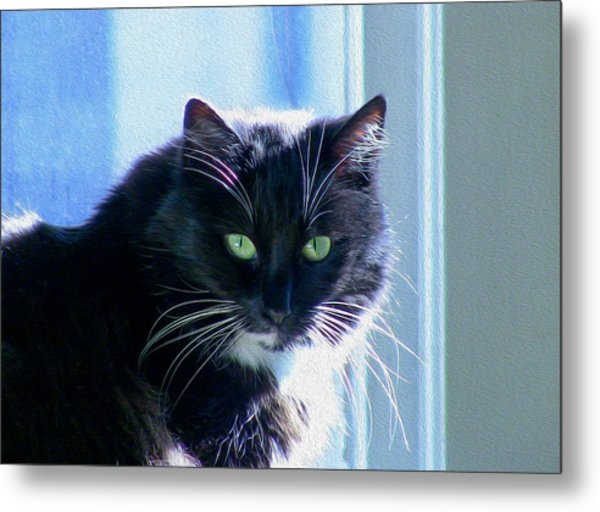Black Cat In Sun Metal Print