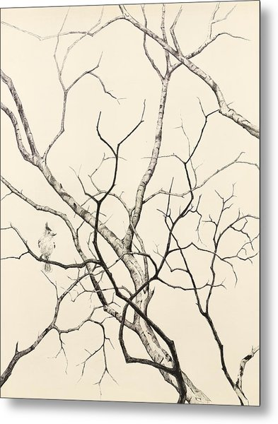 Black Crested Titmouse Metal Print by Paul Illian