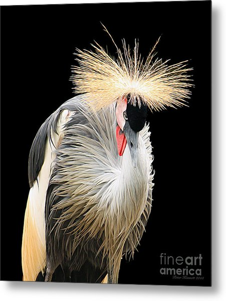 Black Crowned Crane Metal Print