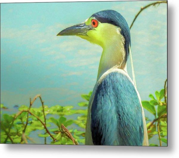 Black-crowned Night Heron Digital Art Metal Print