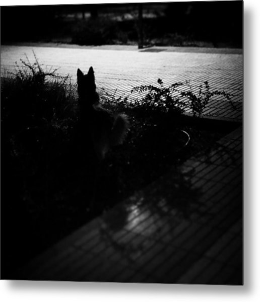Black Dog  #dog #animal #pet #portrait Metal Print