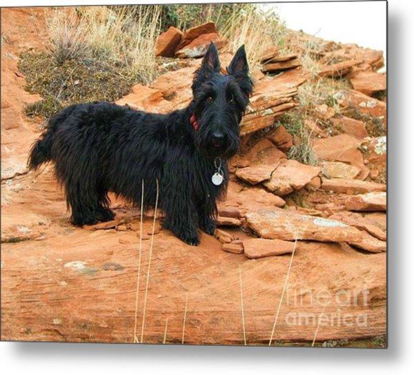 Black Dog Red Rock Metal Print