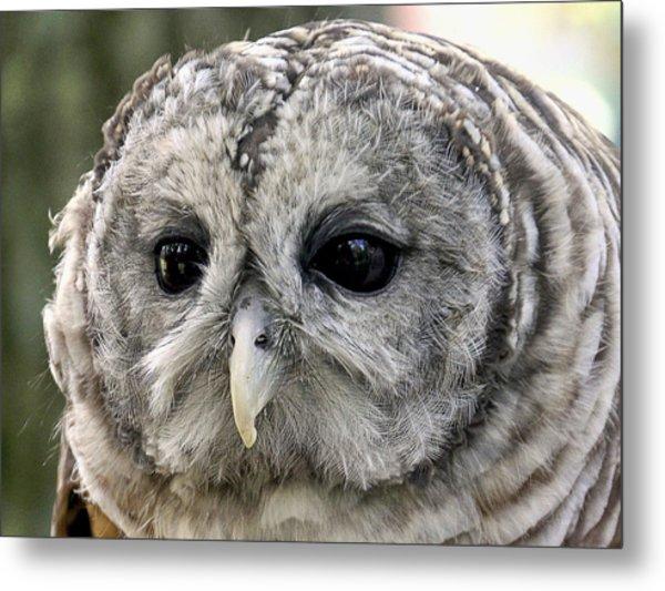 Black Eye Owl Metal Print