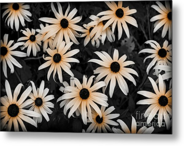 Metal Print featuring the photograph Black Eyed Susan by Elena Elisseeva