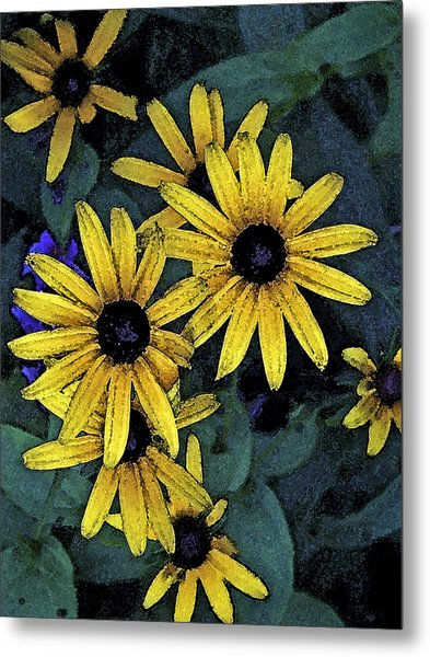 Black-eyed Susans Metal Print by Debra Wilkinson