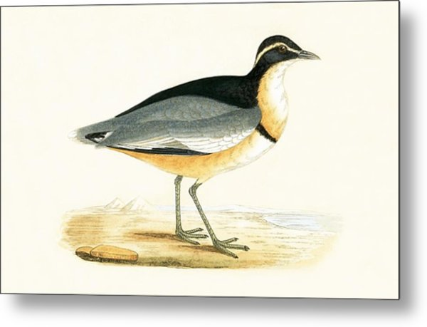 Black Headed Plover Metal Print