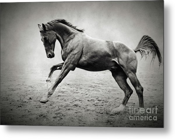 Black Horse In Dust Metal Print